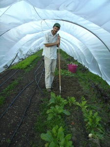 Ben cultivating in one of our caterpillar tunnels.