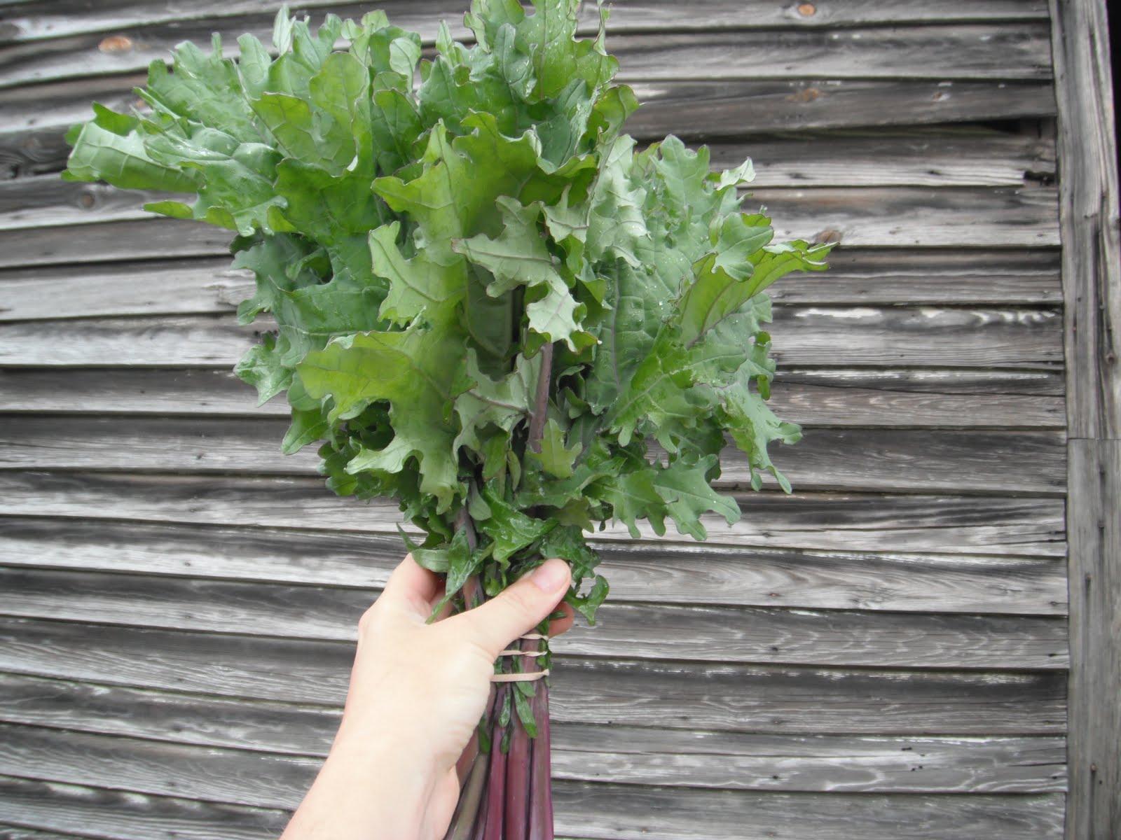 Should you eat kale stems
