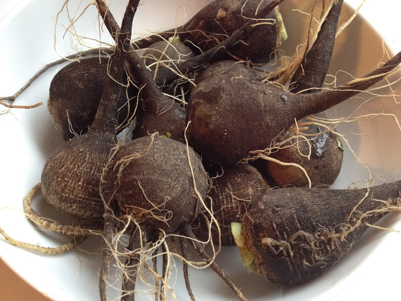Black radishes | Grabbing the Gusto