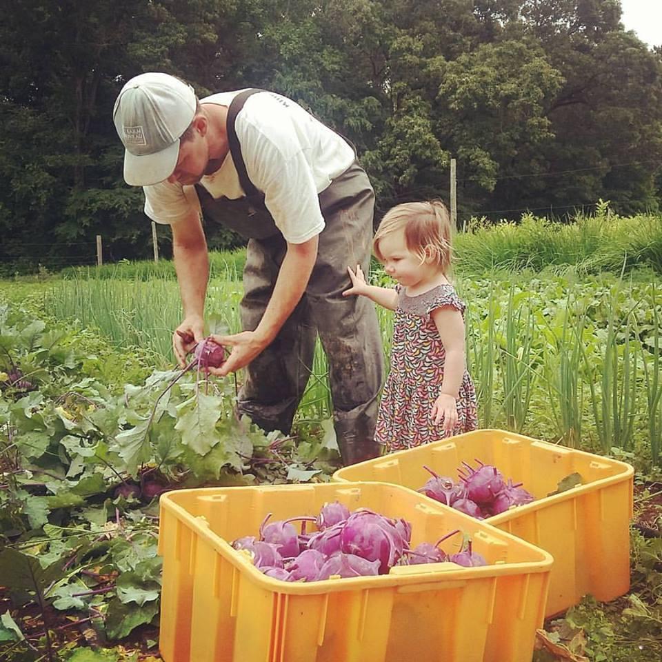 5.22.17 helping papa harvest kohlrabi